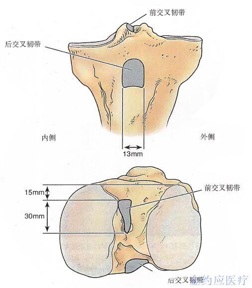 看起来是纤维束而非解剖结构代表功能